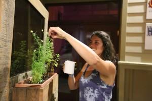 A tea guest picks come Chamomile for her tea.