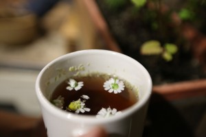 Chamomile from our garden in a guest's tea.