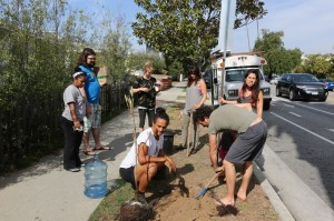 Planting a tree in front of the Giving Garden in Santa Monica, CA.