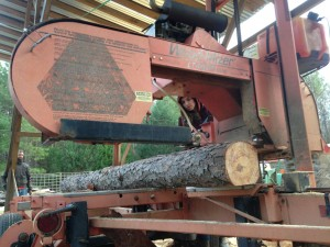 Ally learns how to use the saw mill.