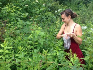 Ally and I still had some time to collect wild berries.